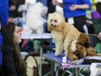 Выставка собак в Туле 14.04.19, Фото: 18