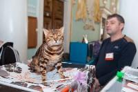 Международная выставка кошек. 16-17 апреля 2016 года, Фото: 103