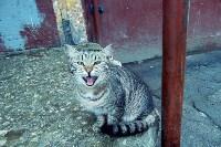 Царькова Наталья 28 лет «Бездомный комочек», Фото: 3