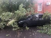 Дерево упало на авто, Фото: 2