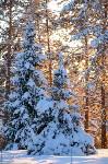 Снежное Поленово, Фото: 70