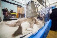 Международная выставка кошек. 16-17 апреля 2016 года, Фото: 43