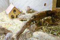 Склеп, кобры, мюзикл и полуночный дозор: В Тульской области прошла «Ночь музеев», Фото: 51