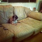 Кошки и собаки, проигравшие битву с мебелью, Фото: 6