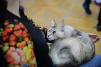 Выставка кошек в Туле, Фото: 62