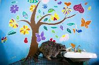 Тульское Шоу ручных енотов: «Из-за карантина нам нужна помощь туляков», Фото: 28