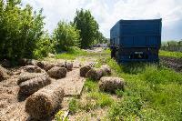 Коровы, свиньи и горы навоза в деревне Кукуй: Роспотреб требует запрета деятельности токсичной фермы, Фото: 24