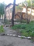 """У ресторана """"Пафос"""" срубили шесть здоровых берез, Фото: 6"""