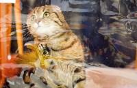 Выставка кошек. 4 и 5 апреля 2015 года в ГКЗ., Фото: 63