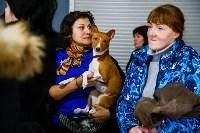 Выставка собак в Туле, Фото: 61
