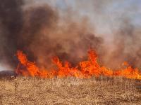 В Федоровке огонь с горящего поля едва не перекинулся на дома, Фото: 19
