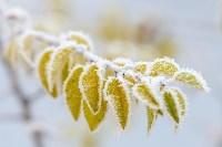 Ледяное утро в Центральном парке, Фото: 4