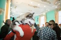 Выставка собак в Туле, 29.11.2015, Фото: 65
