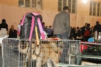 В Туле прошла всероссийская выставка собак, Фото: 20