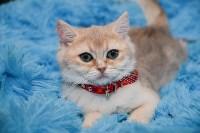 Выставка кошек в Искре, Фото: 1