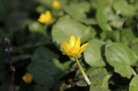 Краски весны в Туле, Фото: 5