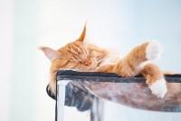Международная выставка кошек. 16-17 апреля 2016 года, Фото: 73