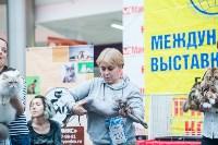 """Выставка """"Пряничные кошки"""" в ТРЦ """"Макси"""", Фото: 40"""