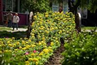 Телега из цветов, Фото: 7