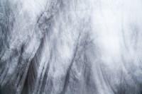 Темная сторона Платоновского парка, Фото: 21