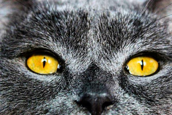 """""""Главная трудность с кошками в том, что у них всегда совершенно одинаковое выражение глаз, видят ли они бабочку или убийцу с топором."""" ©"""