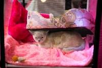 Пряничные кошки, Фото: 31