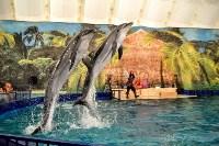 Шоу карибских дельфинов, Фото: 3