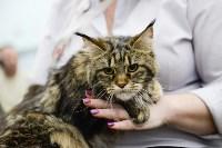 Выставка кошек в Туле, Фото: 37