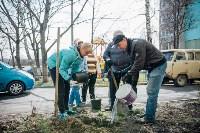 Посадка деревьев во дворе на ул. Максимовского, 23, Фото: 2