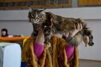 Выставка кошек в ГКЗ. 26 марта 2016 года, Фото: 80