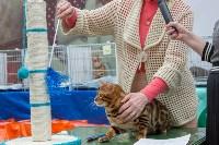 Выставка кошек в Туле, Фото: 26