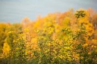 Золотая осень в Тульской области, Фото: 39
