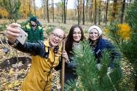 В Центральном парке Тулы появился сосновый бор «Слободы», Фото: 32