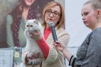 Выставка кошек в Туле, Фото: 56