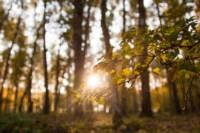 Центральный парк, утро, осень, Фото: 39