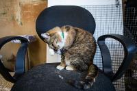 Волонтеры спасли кошек из адской квартиры, Фото: 25