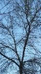 В Мясново погибает лес, Фото: 1