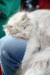 """Выставка """"Пряничные кошки"""" в ТРЦ """"Макси"""", Фото: 75"""