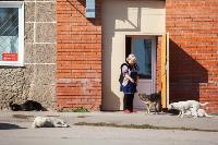 Дворняги, дворяне, двор-терьеры: 50 фото самых потрясающих уличных собак, Фото: 6