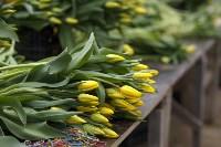 Тюльпаны , Фото: 25