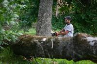 Мне нужнее: в тульском дворе подрядчик самовольно вырубил 15 ясеней и забрал их себе, Фото: 28