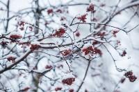 Тула после снегопада. 23.12.2014, Фото: 25