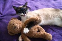 Тульские коты, которых достали хозяева на самоизоляции, Фото: 36
