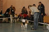 В Туле прошла всероссийская выставка собак, Фото: 40