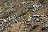 Стрельба, БТР и спасение раненых: в Тульской области бойцы Росгвардии неделю жили в лесу, Фото: 10