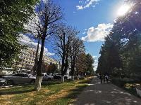 В Туле гибнут деревья, Фото: 54