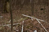 В лесу в Узловском районе обнаружена свалка ртутных ламп, Фото: 4