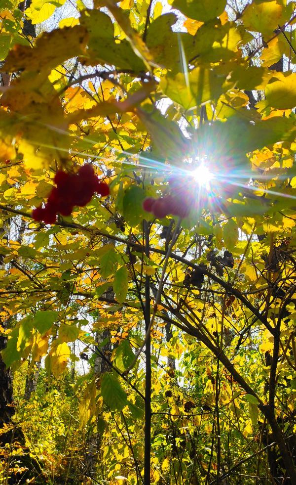 ..... снова осень