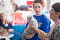 В Туле прошла выставка «Пряничные кошки» , Фото: 10