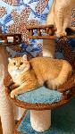 Тульские коты, которых достали хозяева на самоизоляции, Фото: 29